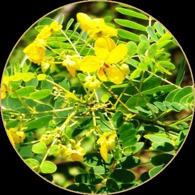 Ranawara from Srilanka